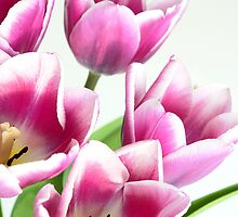 Purple Tulips by imarkimages