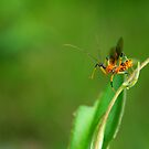 I believe I can fly by khairusy