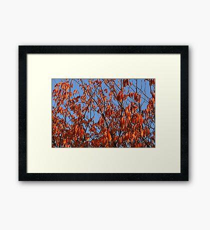 Nature 5 Framed Print