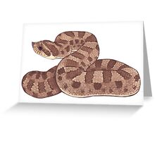 Hognose Snake Greeting Card