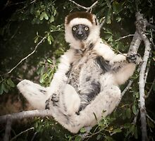The sifaka will see you now by Anthony Brewer