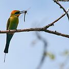 bee eater  by Grandalf