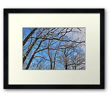 Winter in the Forest I Framed Print