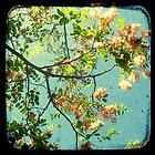 Primavera - TTV by Kitsmumma
