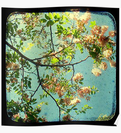 Primavera - TTV Poster