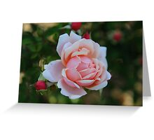 Grandmother's Rose Greeting Card
