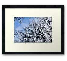 Winter in the Forest III Framed Print