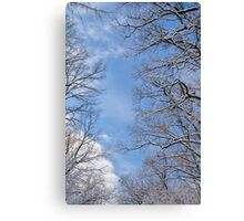 Winter in the forest IV Canvas Print