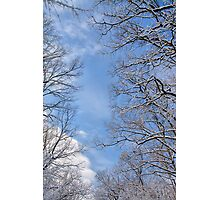 Winter in the forest IV Photographic Print