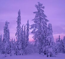 Lapland Evenings 1 by Bart The Photographer