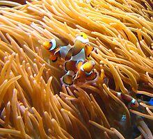 Nemo by Richard Durrant