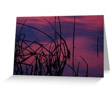 Reeds at Sunrise Greeting Card