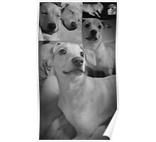 Pretty Posing Puppies Poster