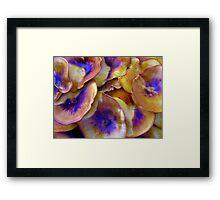 Complimentaries Framed Print