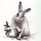 snow bunny by Liesl Yvette Wilson