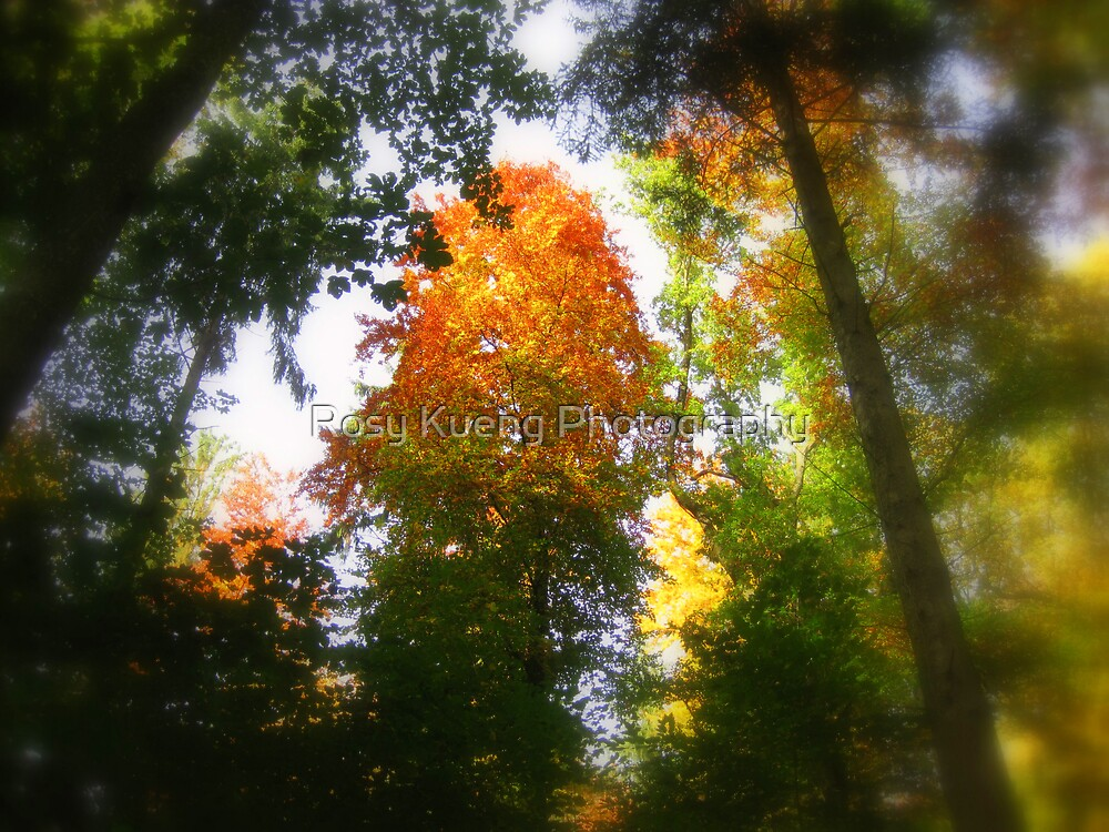 Autumn Dream by Rosy Kueng Photography