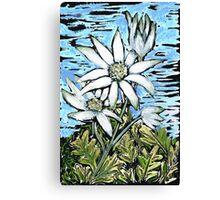 Flannel Flower ~ Healing & Calm  Canvas Print