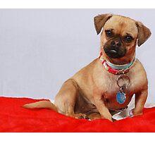Carmalita - The Rescue Dog Photographic Print