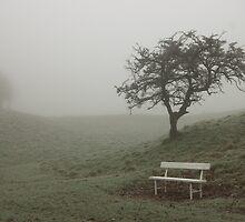 Phoenix Park Fog by Presence