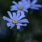 Trio of blue by Chantal Misplon