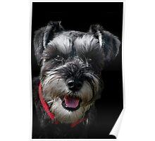 Bob The Dog Poster