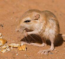 Desert Rat by Craig Hender