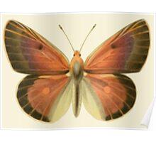 Butterfly Friend Poster