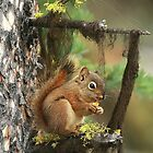 Squirrel Lunching by Tina Dial