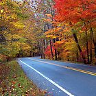 Autumn On A Scenic Highway by NatureGreeting Cards ccwri