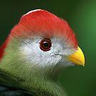 BIRDS by Tina Dial by Tina Dial