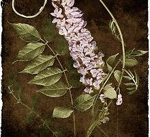 Wisteria by Rene Hales