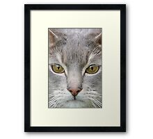 Cats eyes looking at camera close up Framed Print