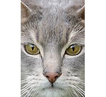 Cats eyes looking at camera close up Photographic Print