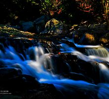 Mountain Stream, Pinkham Notch, White Mountains National Forest, New Hampshire by Richard VanWart