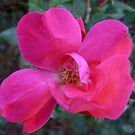 Pretty in Pink by MichelleR