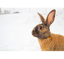 Bruce in the Snow Photographic Print