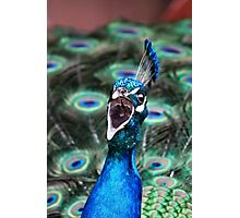 Shouting the Odds Photographic Print
