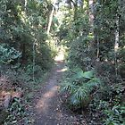 Pretty ferns & undergrowth, ILuka Heritage Rainforest Walk. by Rita Blom