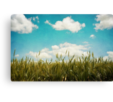 Wheat Field Canvas Print