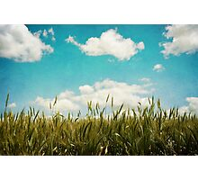 Wheat Field Photographic Print