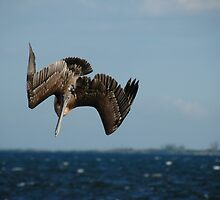 Dive Bomber by claudefletcher