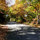 Autumn in Rhode Island | Old Schoolhouse Road by Jack McCabe