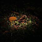 Night version by khairusy