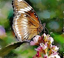 Clipper Butterfly - watercolour by PhotosByHealy