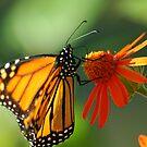 Good Nectar by Donna Adamski