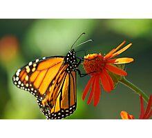 Good Nectar Photographic Print