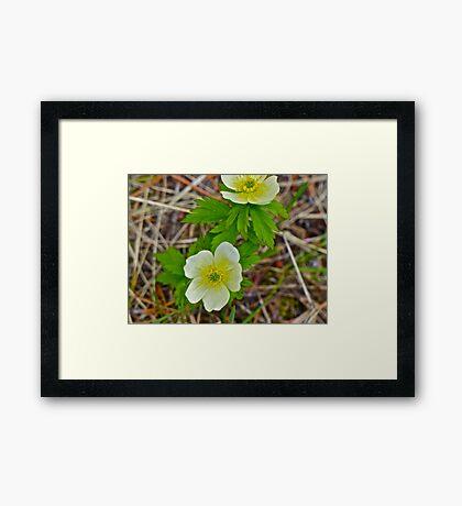 White Promise Framed Print