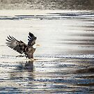Touching Down by Thomas Young