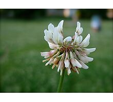 Clover Angel Photographic Print