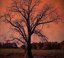 'LINES, SHADOWS, SKY @TREE...!' by missashapoopoo